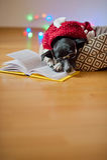 De zwart-witte hond bespectacled en in een rendier zette het kostuum poten op het open boek Royalty-vrije Stock Foto