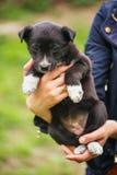 De zwart-witte hond zit in het gras De dakloze hond zoekt een huis royalty-vrije stock fotografie