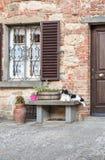De zwart-witte kat Royalty-vrije Stock Foto's