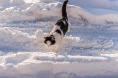 De zwart-witte kat gaat door een rommel gemaakt van met witte sneeuw r Royalty-vrije Stock Afbeelding