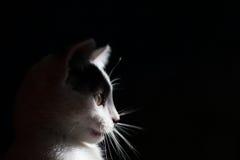 De zwart-witte kat is geïsoleerd een zwarte achtergrond Royalty-vrije Stock Foto