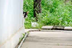 De zwart-witte kat neemt piek achter de muurhoek heimelijk royalty-vrije stock foto's