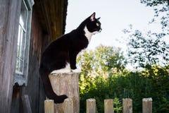 De zwart-witte kat zit op houten post dichtbij houten dorpshuis Stock Afbeeldingen