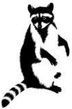 De zwart-witte lineaire verf trekt wasbeerillustratie Stock Foto's