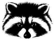 De zwart-witte lineaire verf trekt wasbeerillustratie Royalty-vrije Stock Afbeeldingen