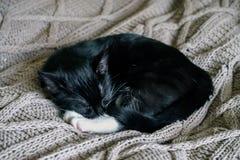 De zwart-witte slaperige kat die op een bed rusten werpt stock foto