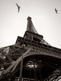 De zwart-witte Toren van Eiffel in de Stad van Parijs  royalty-vrije stock afbeeldingen