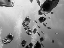 De zwart-witte Vissen van de Schoolvlinder Onderwater met Bellen Royalty-vrije Stock Foto
