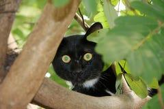 De zwart-witte Zwarte van de kleurenkat is meestal Witte punten is klein met groene ogen op de boom Royalty-vrije Stock Afbeelding