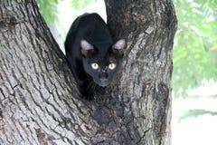 De zwart-witte Zwarte van de kleurenkat is meestal Witte punten is klein met groene ogen op de boom Royalty-vrije Stock Foto's