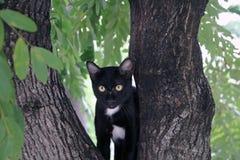 De zwart-witte Zwarte van de kleurenkat is meestal Witte punten is klein met groene ogen op de boom Royalty-vrije Stock Fotografie