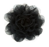 De zwarte bloem nam van kant toe Stock Foto's