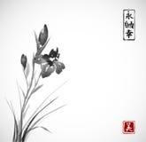 De zwarte die Iris bloeit hand met inkt in Aziatische stijl op witte achtergrond wordt getrokken Traditionele oosterse inkt die s royalty-vrije illustratie