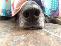 De zwarte hond die verbergen in badkamers omdat het van onweersbuien bang is stock fotografie