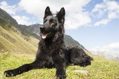 De zwarte hond van de Duitse herder Royalty-vrije Stock Foto's