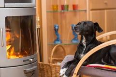 De zwarte hond verwarmt zich voor open haard Stock Foto