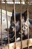 De zwarte hond werd verlaten in de kooi. Stock Afbeeldingen