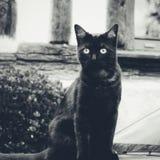 De zwarte kat Stock Foto