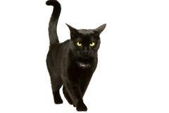 De zwarte kat beweegt 1 Stock Foto's
