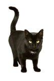 De zwarte kat beweegt 2 Stock Foto