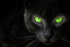 De zwarte kat kijkt in een lens. Stock Foto