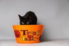 De zwarte kat met groene ogen gekleed met een hoofdstuk van de hefboomo lantaarn tegen een naadloze achtergrond achter een truc o stock foto's