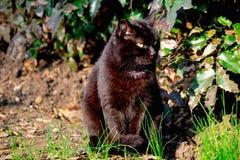 De zwarte kat met groene ogen zit in het park op groen gras stock fotografie