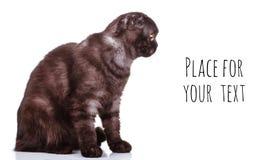 De zwarte kat met grote gele ogen bekijkt de plaats voor de tekst Geïsoleerd op wit Stock Fotografie