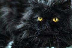 De zwarte kat met grote gele ogen sluit omhoog Stock Foto's
