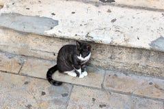 De zwarte kat met witte poten zit Royalty-vrije Stock Foto