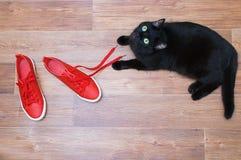 De zwarte kat speelt op de vloer met rode tennisschoenen stock fotografie