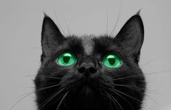 De zwarte kat ziet omhoog eruit stock foto