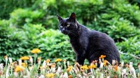 De zwarte kat zit amid groen, bloeit en onderzoekt de afstand stock fotografie