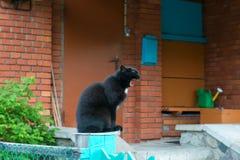 De zwarte kat zit en geeuwen royalty-vrije stock foto
