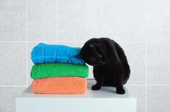 De zwarte kat zit op een witte nightstand en oneffenheden tegen badstofhanddoeken Grijze tegel als achtergrond royalty-vrije stock afbeeldingen