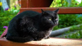 De zwarte kat zit op stappen stock video