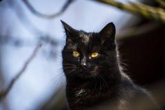 De zwarte kat is zo mysterios Royalty-vrije Stock Foto's
