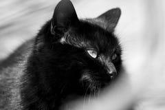 De zwarte kat is zo mysterios Royalty-vrije Stock Foto