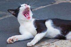 De zwarte katten zijn leuke geeuw met lethargie stock foto