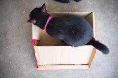 De zwarte katten zit in een document vakje Stock Fotografie