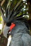 De zwarte papegaai in de dierentuin stock afbeelding