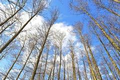 De zwarte rek van elsbomen naar de hemel royalty-vrije stock afbeelding