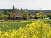 De Zwarte Schuur 16de Eeuw, Woodoaks-Landbouwbedrijf, Esdoornkruis, Hertfordshire met voorgrond van vage gele bloeiende boerenkoo royalty-vrije stock afbeelding