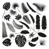 De zwarte Tropische Bladereninzameling, isoleert vector reeks Royalty-vrije Stock Afbeelding
