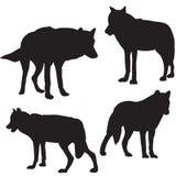 De zwarte van het wolfssilhouet vele individuen Stock Foto