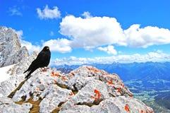 De zwarte vogel bovenop de wereld, schoonheid van aard, blauw alpien landschap, blauwe hemel, sneeuw behandelde bergpieken royalty-vrije stock afbeeldingen