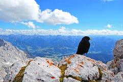 De zwarte vogel bovenop de wereld, schoonheid van aard, blauw alpien landschap, blauwe hemel, sneeuw behandelde bergpieken stock afbeeldingen