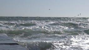De Zwarte Zee odessa stock video
