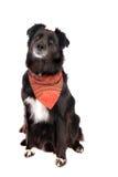 De zwarte Zitting van de Hond royalty-vrije stock foto's