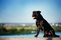 De zwarte zitting van de hondTerriër op aardachtergrond royalty-vrije stock foto